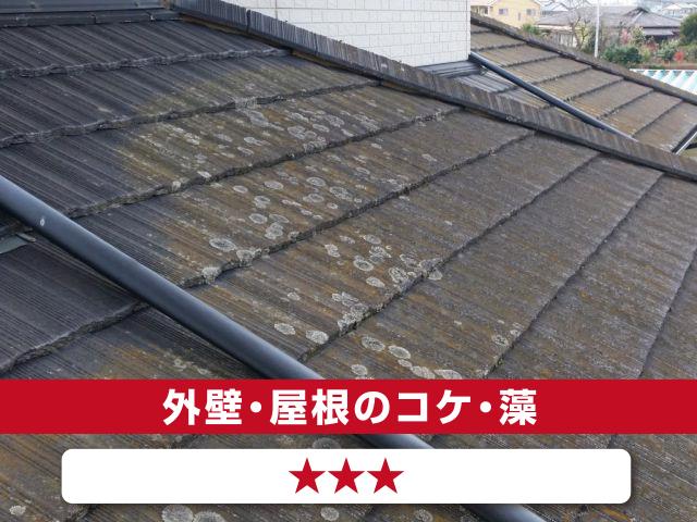 外壁・屋根のコケ・藻